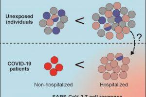 COVID-19: Kontakt mit Erkältungsviren bietet offenbar keinen Schutz