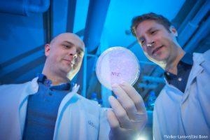 Neue vielversprechende Antikörper gegen SARS-CoV-2