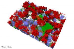 Warum sich SARS-CoV-2 in den oberen Atemwegen besser vermehrt